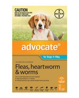 advocate-for-small-dogs-4-to-10kg