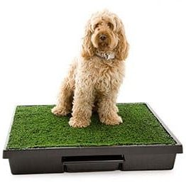 Dog Waste Disposal Systems & Tools