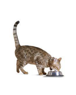 Cat Bowls, Feeders & Waterers