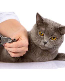 Cat Nail Tools